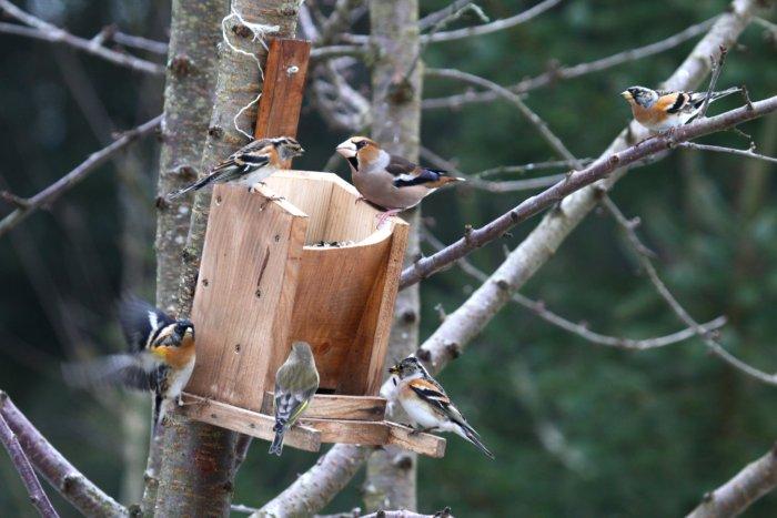 association oiseaux nature accueillir la biodiversit chez soi. Black Bedroom Furniture Sets. Home Design Ideas