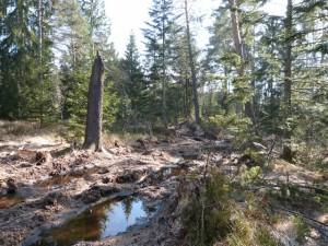 Un chemin forestier abimé en zone Natura 2000 dans les Vosges
