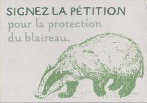 Signez la pétition pour la protection du blaireau
