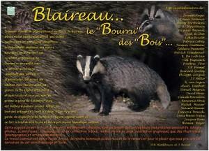 """Exposition """"Blaireau, le """"bourru"""" des bois"""""""