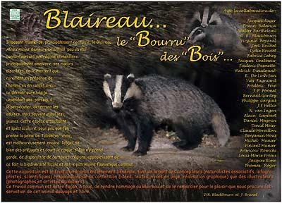 Blaireau-Expo...Le bourru des bois