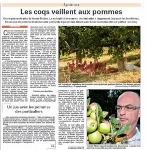 Les coqs veillent aux pommes - Vosges Matin Août 2015