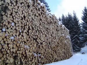 Le bois, un revenu durable pour les communes?