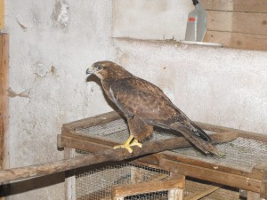Berthe-Buse variable
