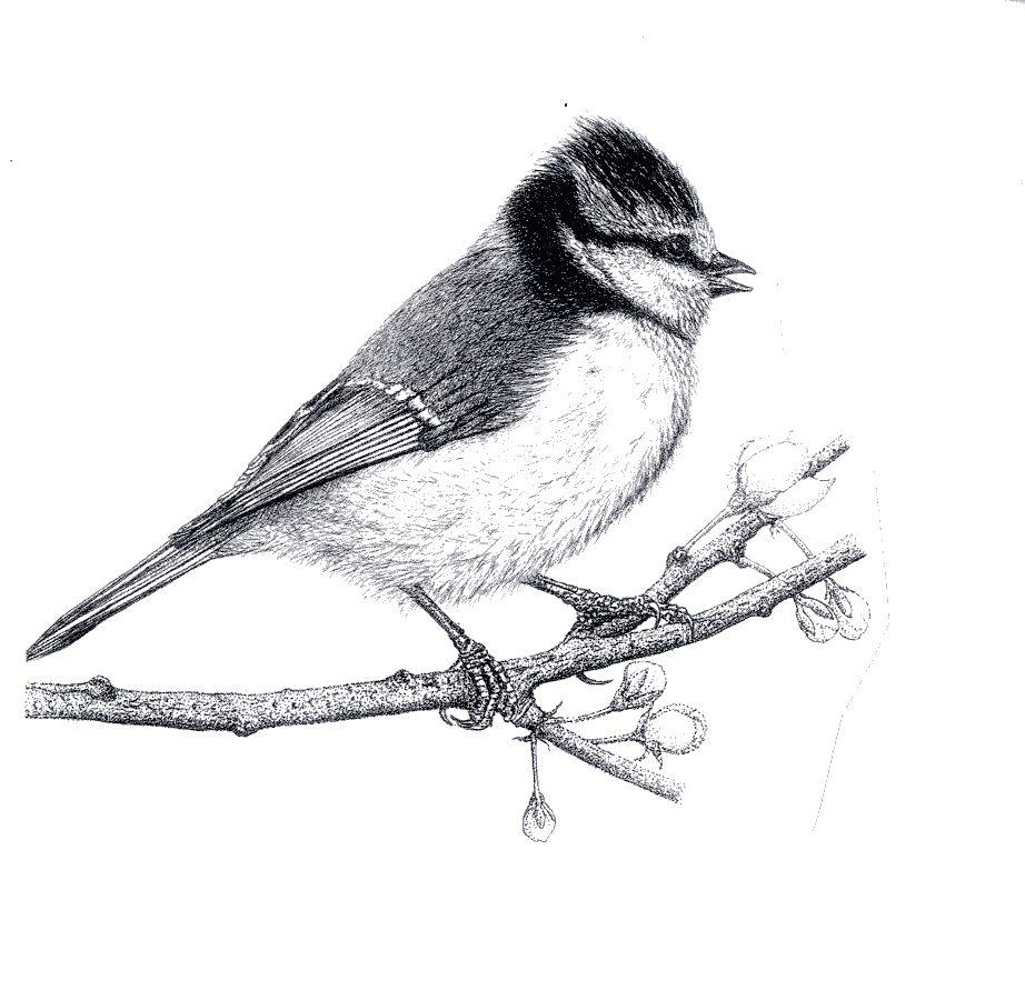 Association Oiseaux Nature   Accueillir la biodiversité chez soi - Nichoir Mésange Orientation