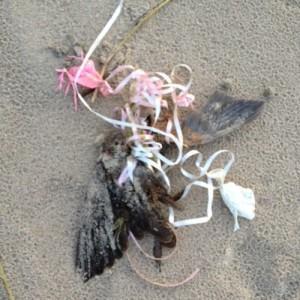 Un oiseau retrouvé mort prisonnier de rubans de ballons