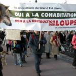 35 Manifestation contre les tirs de loups Lyon 16-01-2016