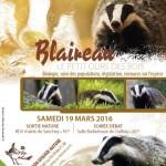 Le 19 mars: le blaireau, petit ours de nos forêts