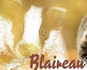 Blaireau - Image Nicolas M-Dessin Catherine B