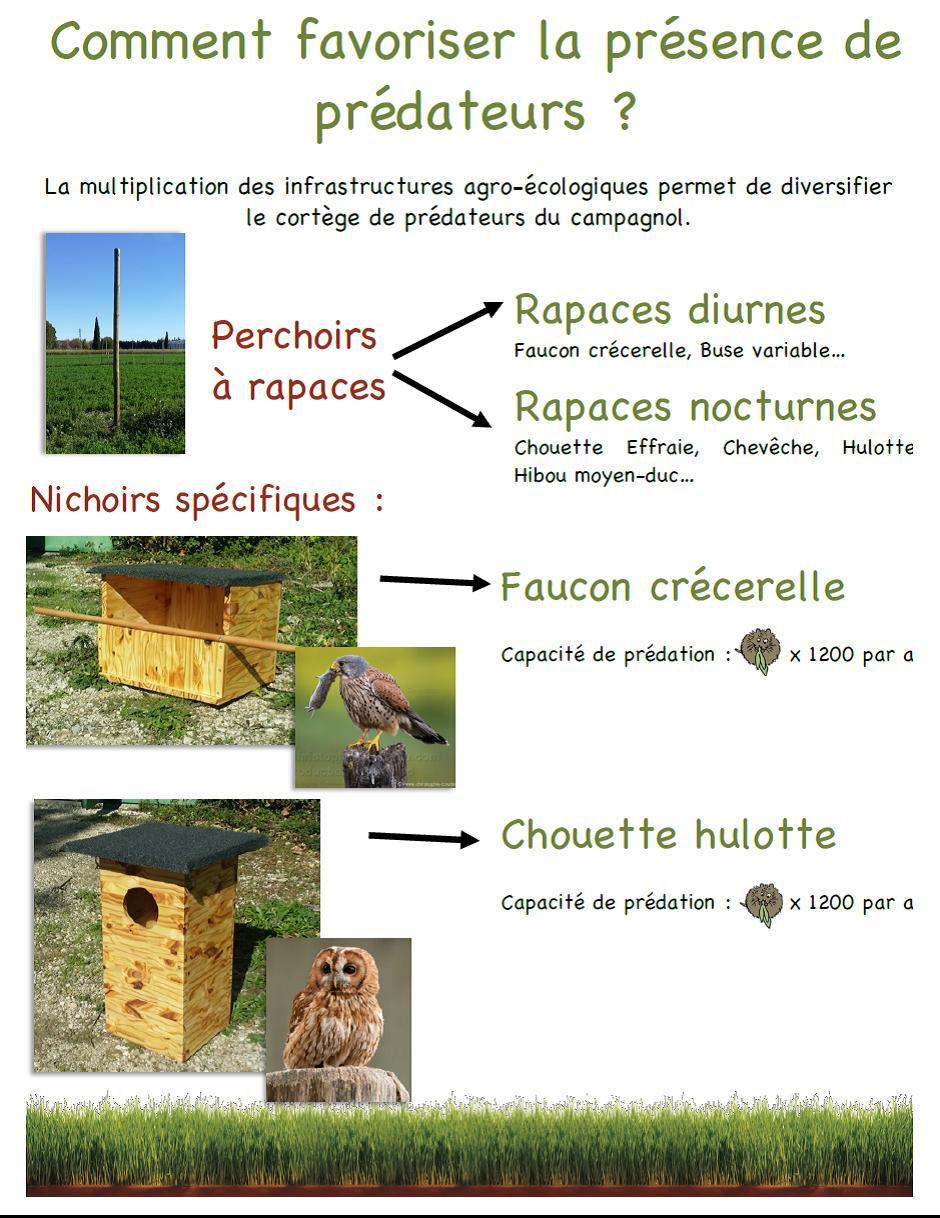 association oiseaux nature cohabiter avec la faune sauvage. Black Bedroom Furniture Sets. Home Design Ideas