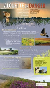 Alouette en danger - Affiche 2
