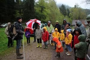 La protection des amphibiens au Val d'Ajol