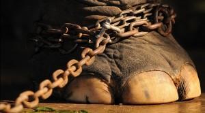 Interdiction des animaux sauvages dans les cirques