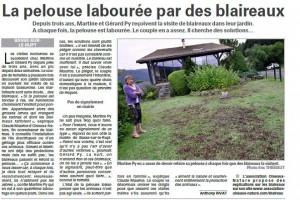 La pelouse labourée par des blaireaux - Vosges Matin du 06-08-2016