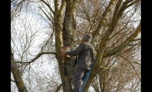 Des nichoirs à la-maison de retraite de Bruyères-Image Vosges Matin 23-03-2017