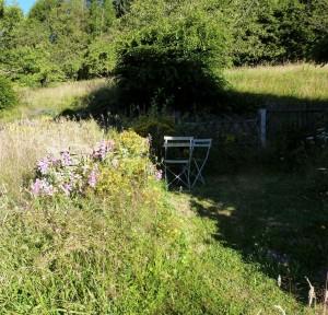 Herbes folles et muret dans un coin de jardin - Photo Pascale Meignan