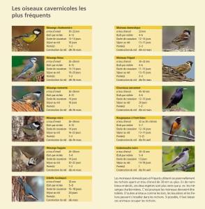 Les oiseaux cavernicoles les plus fréquents - Station Ornithologique Suisse