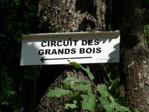 Circuit des grands bois à Epinal