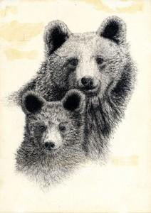 Ourse et ourson Dessin de Catherine Bernardin