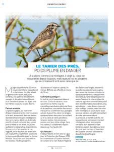 Le tarier des prés poids plume en danger - Vosges Magazine juin 2020