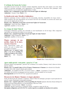 Programme des sorties Oiseaux Nature 2021-2