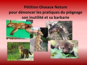Petition Oiseaux Nature pour dénoncer les pratiques du piégeage