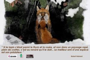 affiche renard- Conseil général du bas Rhin