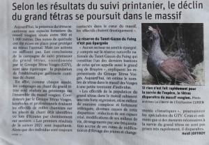 Le déclin du grand tétras se poursuit dans le massif - Vosges Matin 21-05-2021