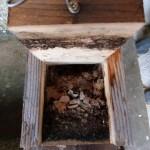 Intérieur d'un nichoir à balcon occupé par une sittelle torchepot