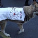 21 Manifestation contre les tirs de loups Lyon 16-01-2016