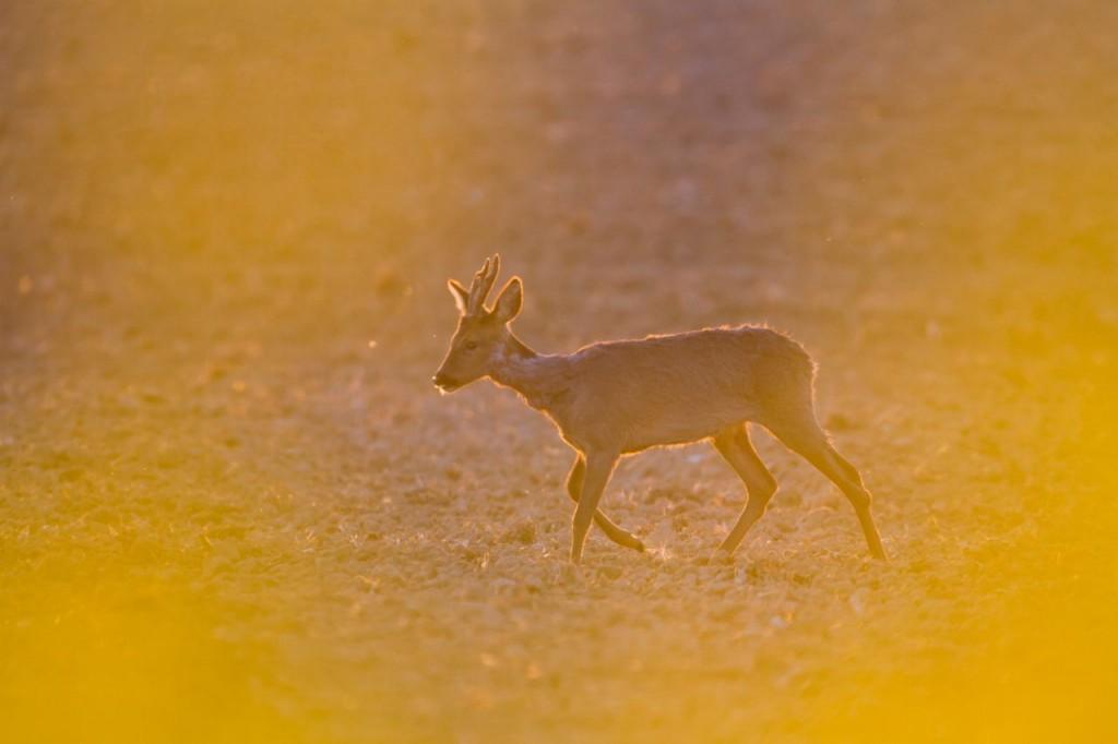 Pétition: état d'urgence pour la reprise de la chasse