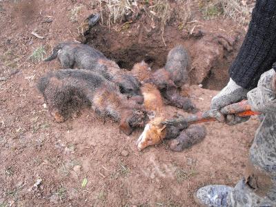 Le ministère de l'écologie s'intéresse au bien-être animal