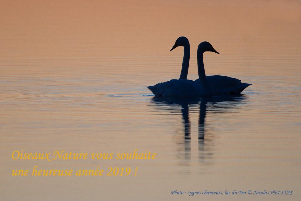 vœux 2019 Oiseaux Nature © Nicolas Hélitas